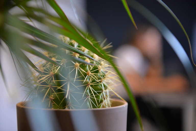 kancelaria-madviso-kaktus